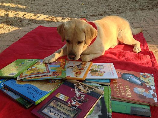 Bea-entrenando-a-permanecer-en-el-espacio-de-lectura