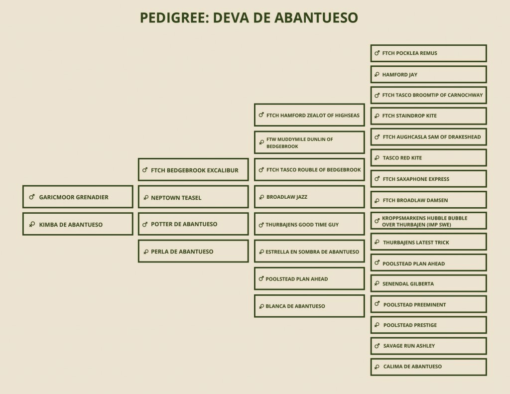 PEDIGREE-DEVA
