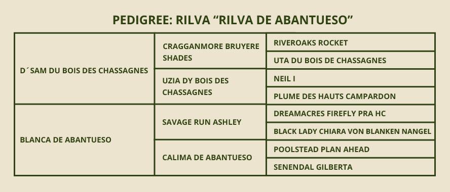 PEDIGREE-RILVA