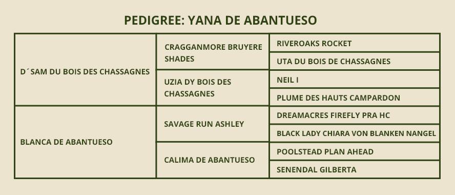 Pdigree-yana
