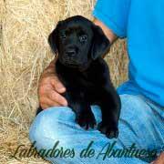 cachorro-negro-de-abantueso