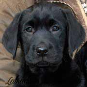 cara-cachorro-negro