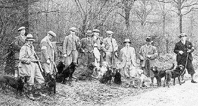 labrador_retriever_antiguo