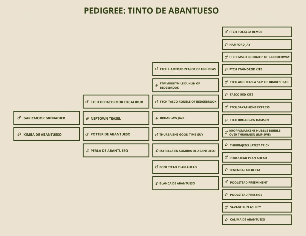 pedigree-tinto