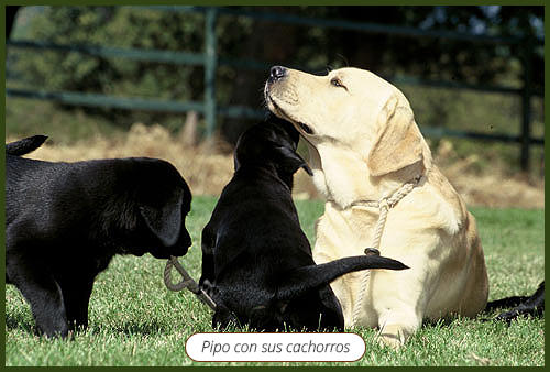 pipo_con_sus_cachorras