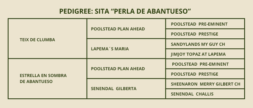 PEDIGREE-Sita